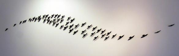 Smith Birds