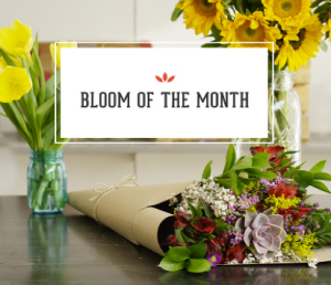 bloom of the month